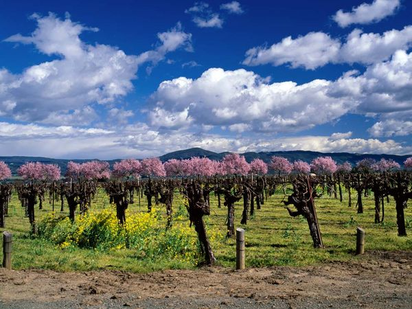 Napa Valley Vineyards - Look At Those Blue Skies!