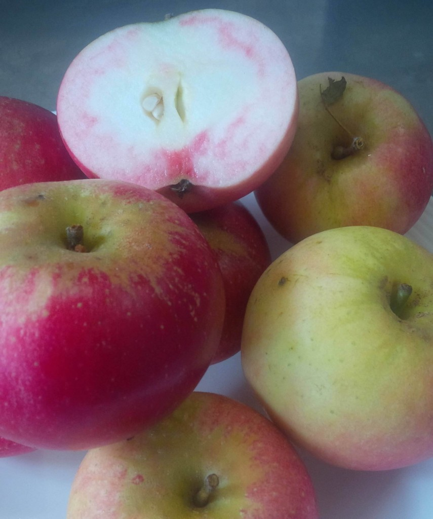 Autumn Apples on Local Honest Simple