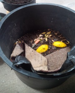 Worm Farm Compost, Black Gold.