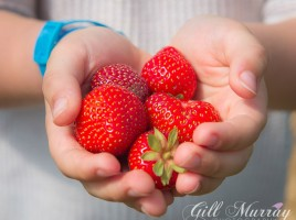 Strawberry Picking & Summer Salad 3